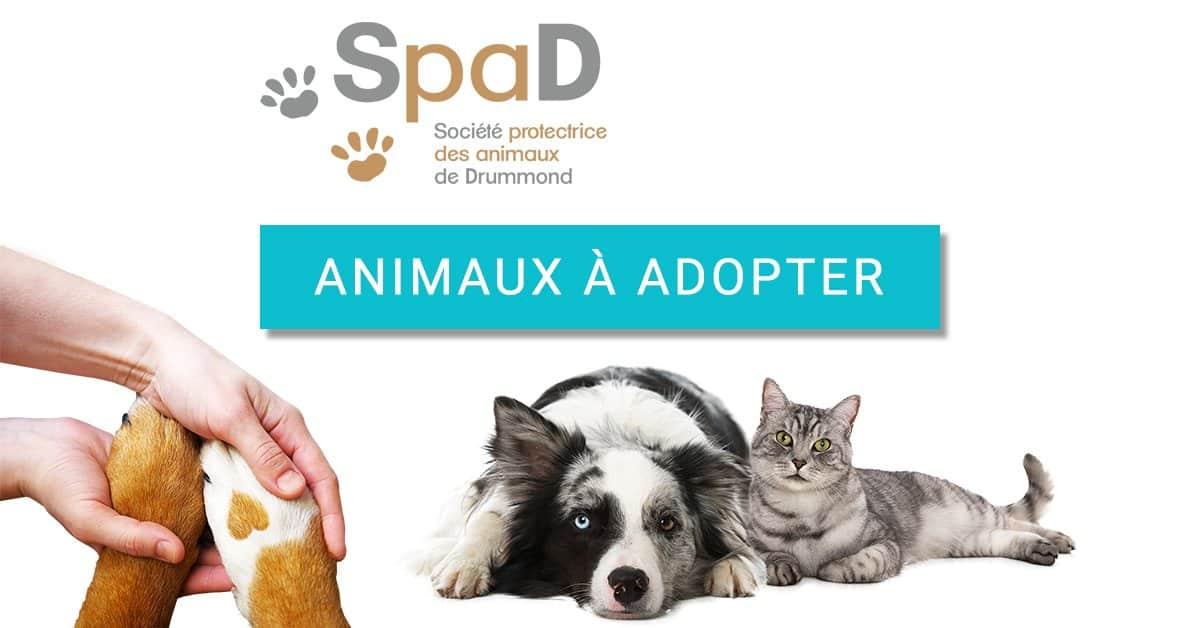 Chats A Adopter Adoption De Chats A Drummond Visitez La Spad